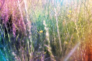 overgrown meadow